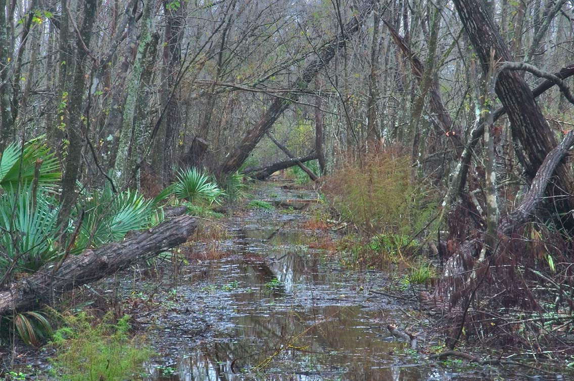 Wood Duck Trail in Barataria Preserve after heavy rains. South from New Orleans, Louisiana