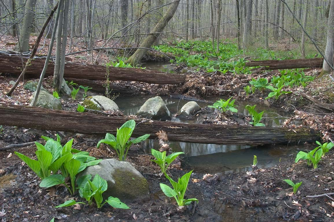 A creek in Woodfield Reservation. Princeton, New Jersey