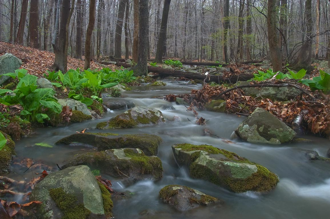 A creek in hardwood forest in John Witherspoon Woods park. Princeton, New Jersey