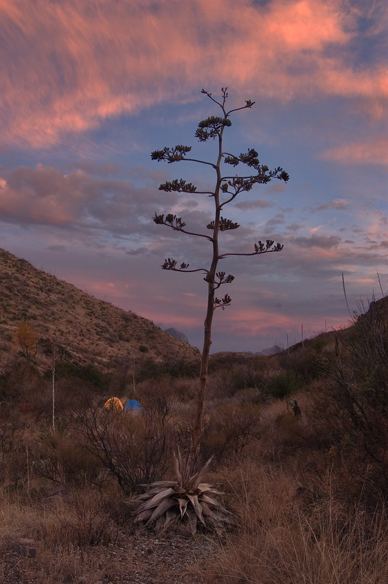 Fresno Circle campsite near Dodson Trail at evening. Big Bend National Park, Texas