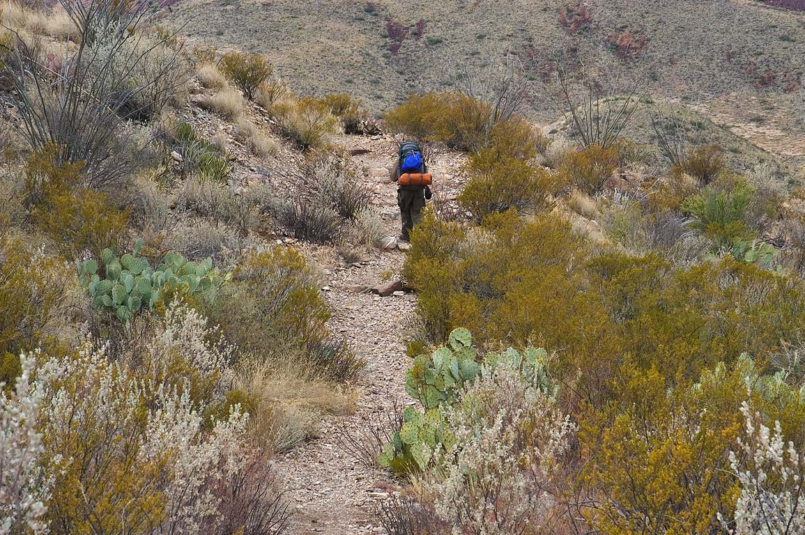Smokey Creek Trail through creosote bushes and...Big Bend National Park, Texas