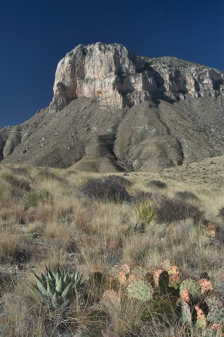 Agave, cacti and El Capitan Mountain from a trail...Mountains National Park. Texas