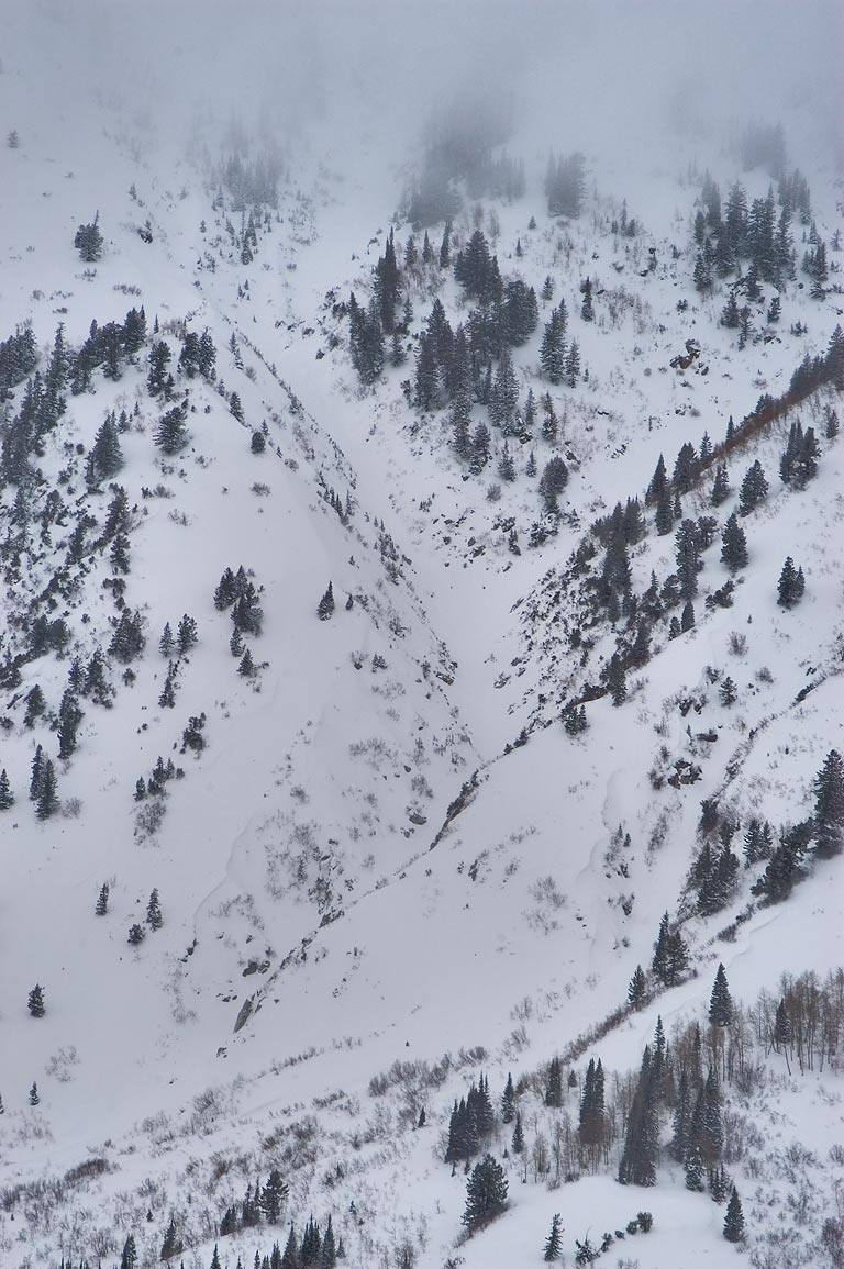 Forest and snow on a slope of Superior Peak...Miners Camp in Snowbird Ski Area. Utah