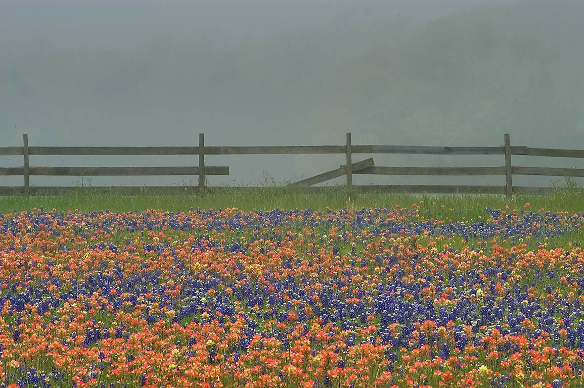 Field of flowers and broken fence in Old Baylor Park. Independence, Texas