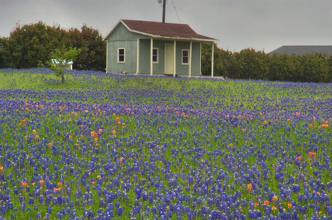 House and bluebonnet near Clarinn St.. East from Brenham, Texas