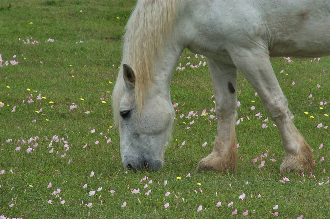 Grazing horse in Barrington farm in Washington-on...State Historic Site. Washington, Texas