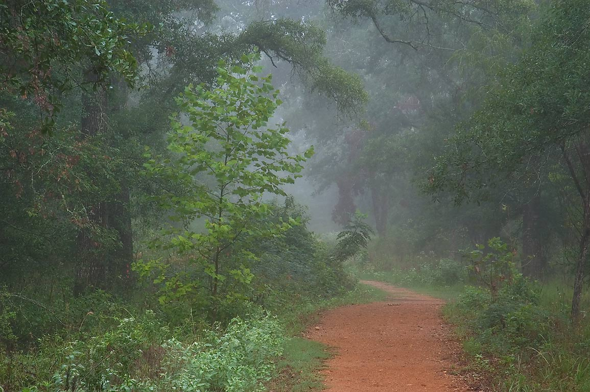 Forest around Deer Run Trail in fog in Lick Creek Park. College Station, Texas