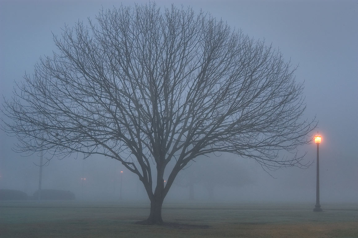 Tree in front of Administration Building in fog...M University. College Station, Texas