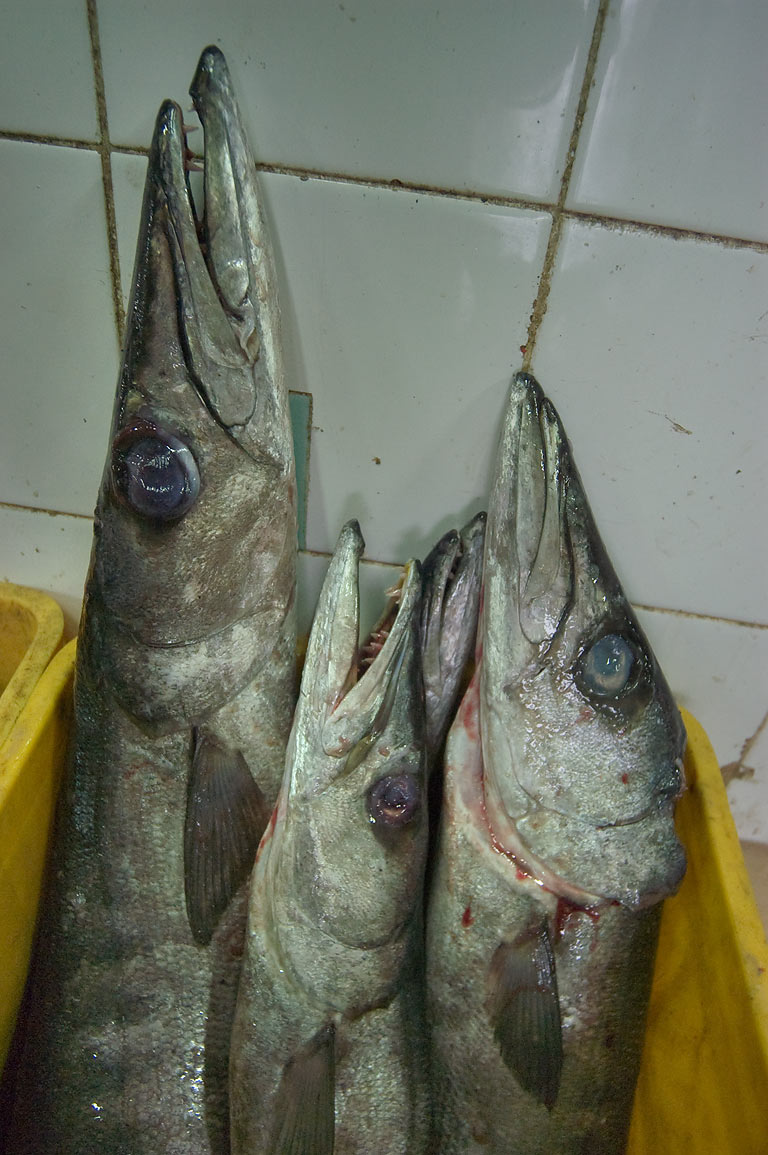 Box of barracuda fish on sale in Central Fish Market. Doha, Qatar