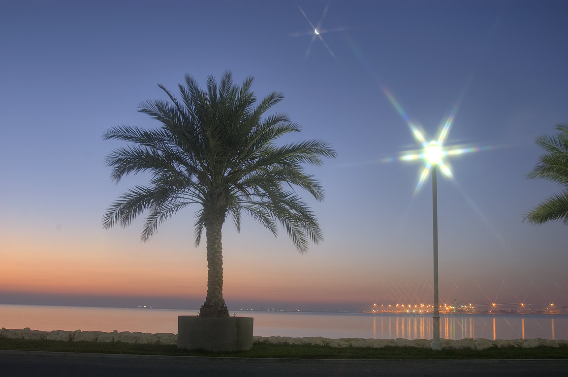 Palm and a lamppost of marina of Four Seasons Hotel at morning. Doha, Qatar