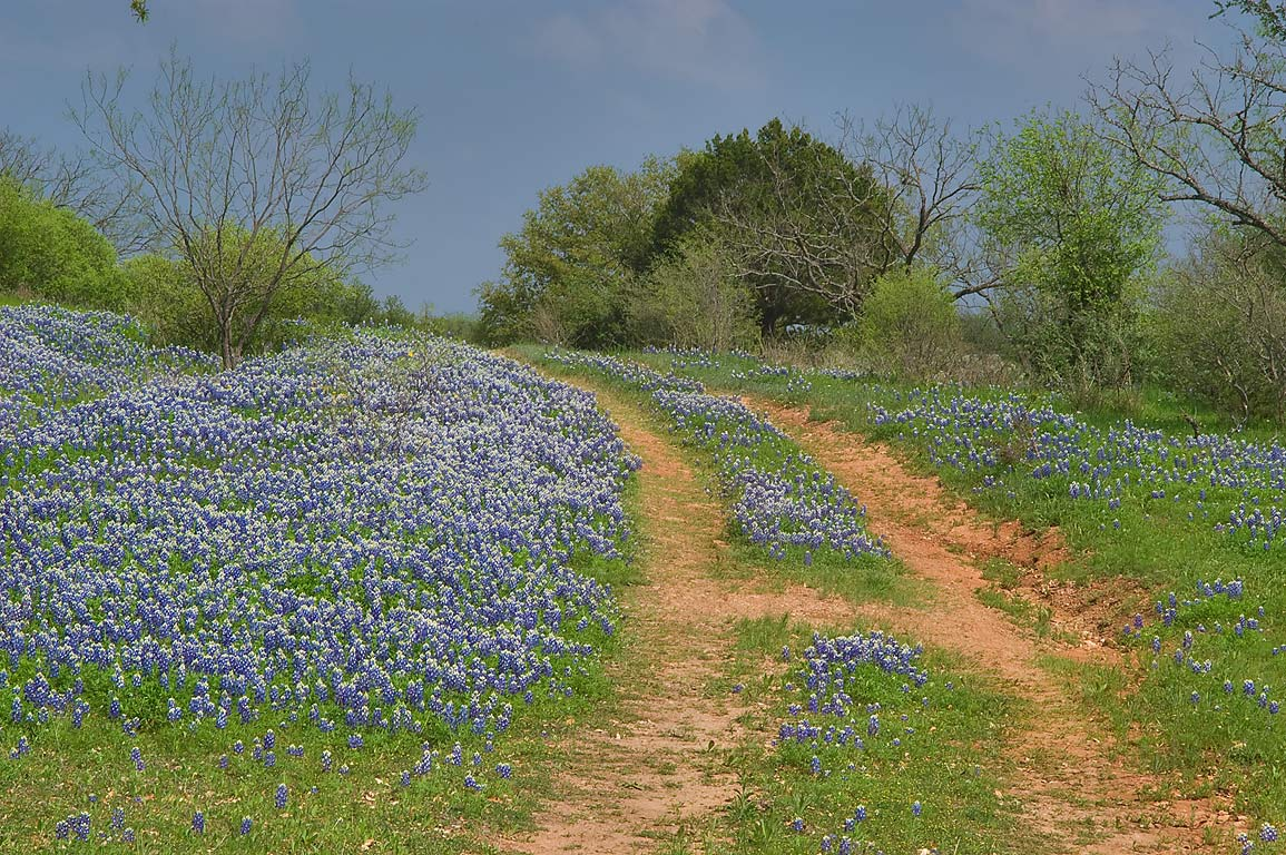 Red dirt ranch road with bluebonnets (lupine...Rd. 308 south-east from Llano. Texas