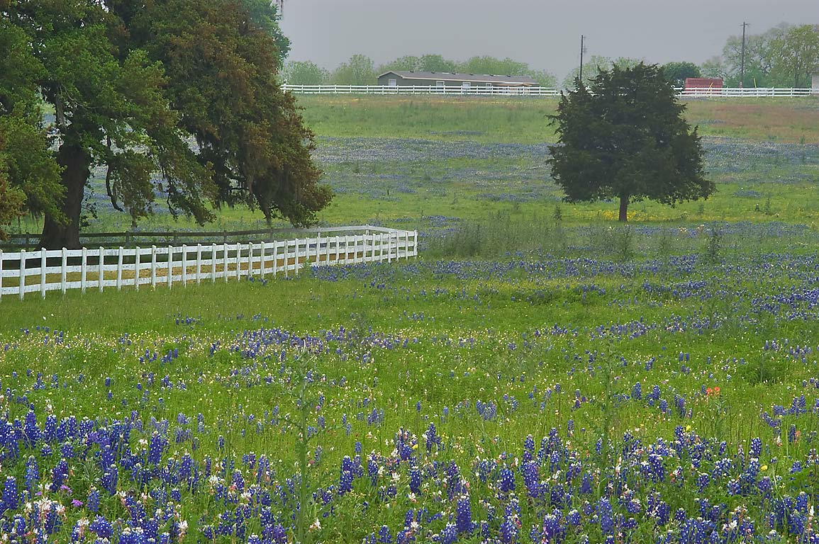 Pasture with bluebonnets south from FM 390...Old Baylor Park. Independence, Texas