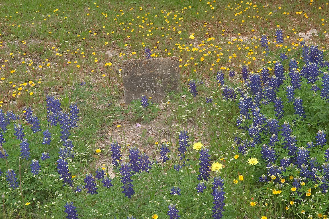 Tomb of Fredille Ray with bluebonnets and...Dunnheim Rd. east from Gay Hill. Texas