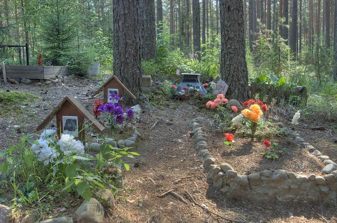 Pet cemetery in a forest north from Orekhovo, north from St.Petersburg. Russia