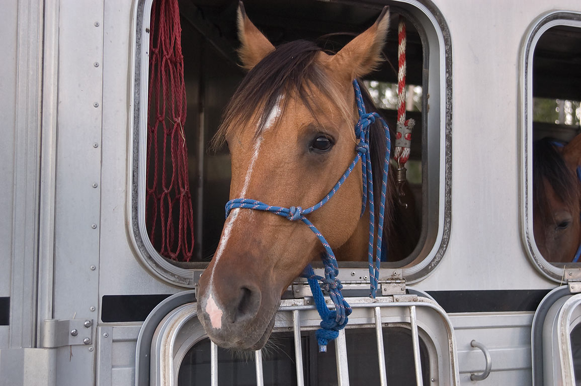 Horse in a window of a trailer parked near Old Faithful Geyser. Yellowstone Park, Wyoming
