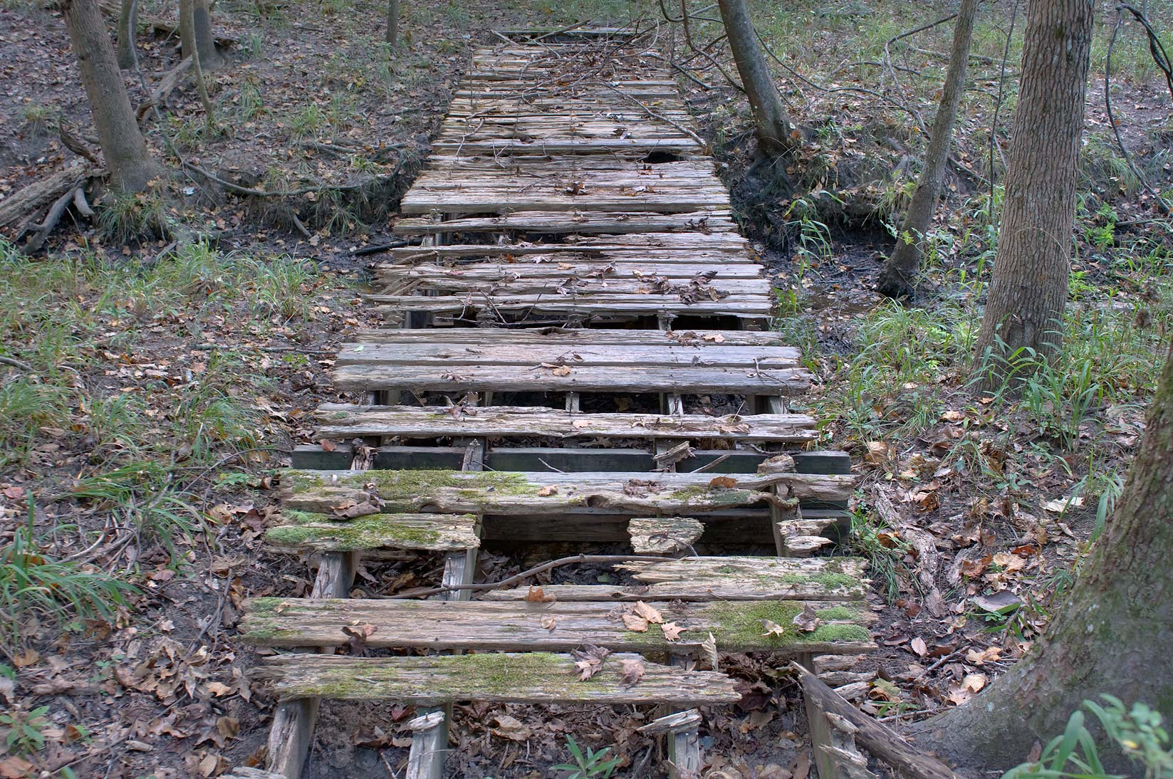 Old wooden bridge over tributary of Alligator...Raven in Huntsville State Park. Texas