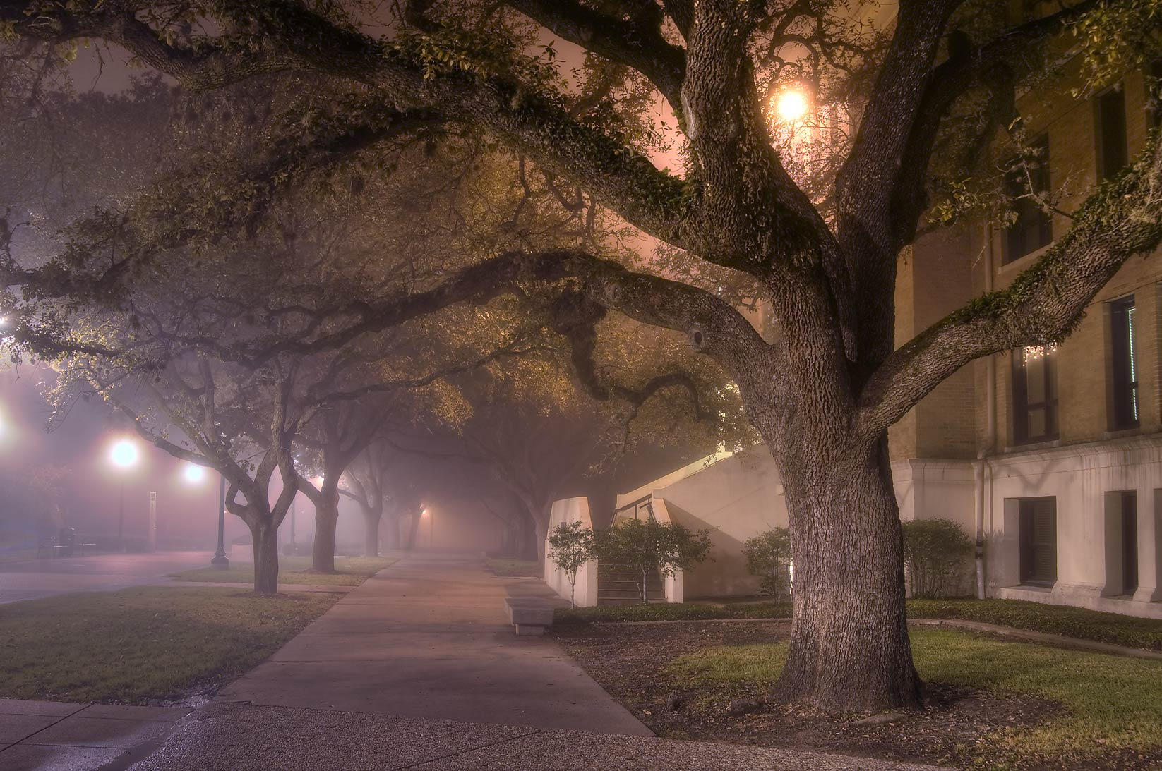 Military Walk and Legett Hall on campus of Texas...in fog. College Station, Texas