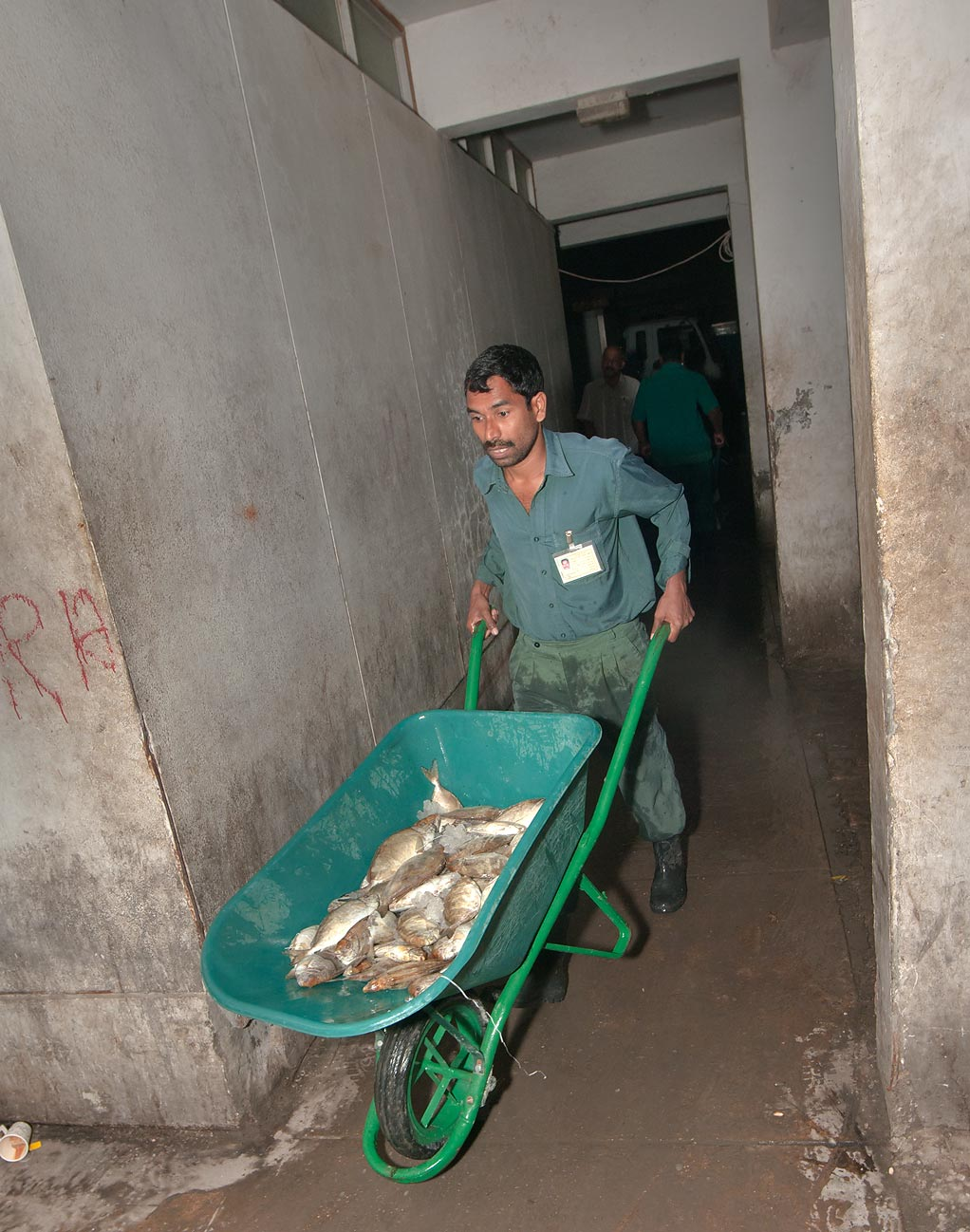 Worker with a cart carrying fish in wholesale Central Fish Market. Doha, Qatar