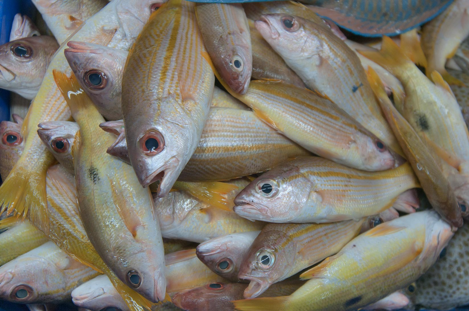 Some yellowish fish in Central Fish Market. Doha, Qatar