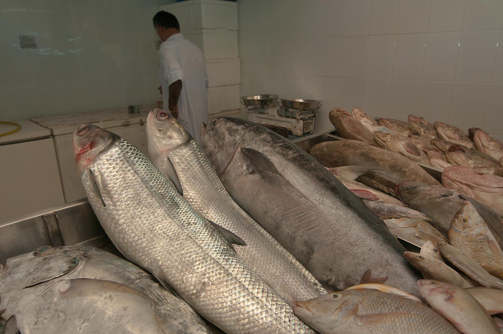 Large fish on a stall in Central Fish Market. Doha, Qatar
