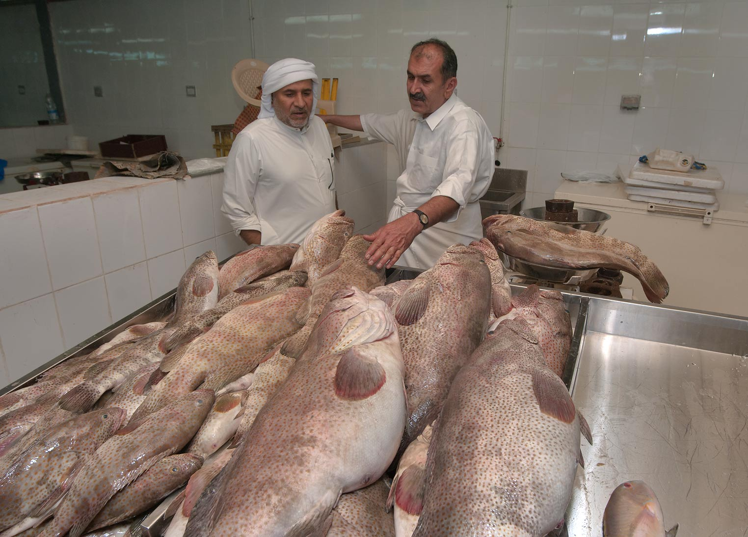Sellers tapping Hamour Fish in Central Fish Market. Doha, Qatar