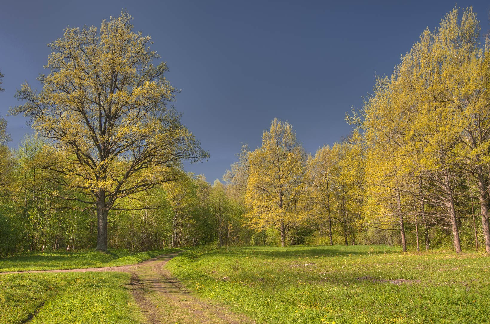 Meadow in a park of Lomonosov (Oranienbaum). West from St.Petersburg, Russia