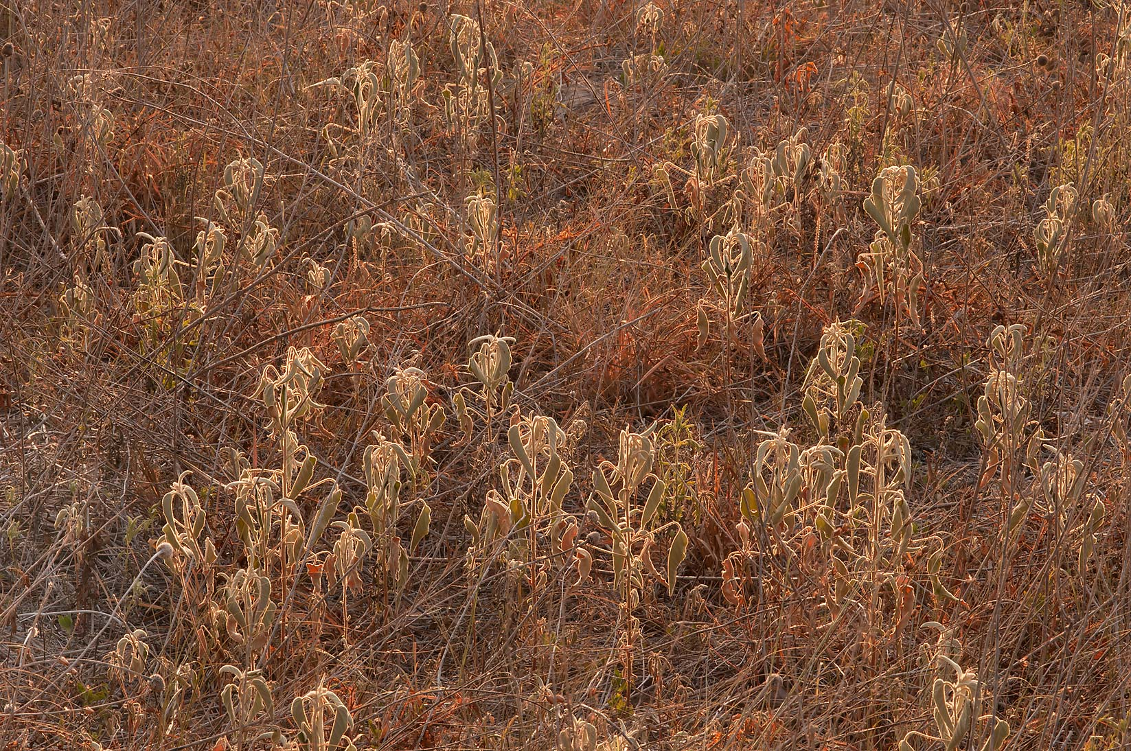 Dried prairie in Washington-on-the-Brazos State Historic Site. Washington, Texas