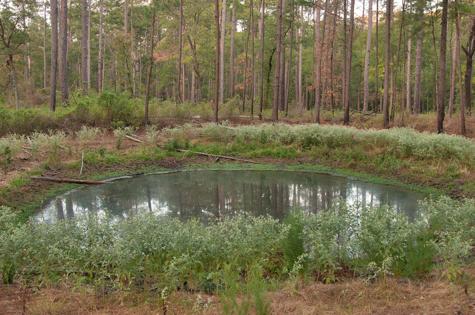 Small lake on Little Lake Creek Loop Trail in Sam Houston National Forest. Richards, Texas