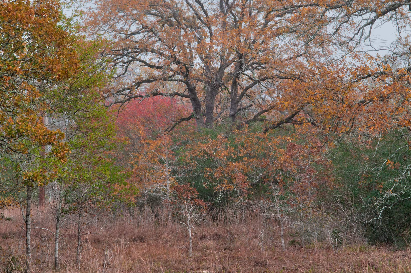 Prairie in Lick Creek Park. College Station, Texas