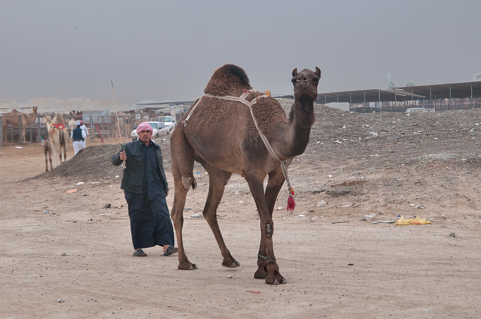 A man with a camel in Camel Market (Souq). Doha, Qatar