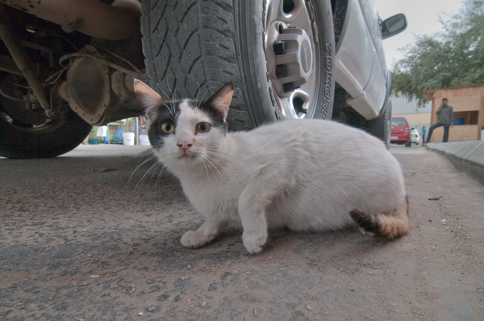 A cat near Omani Market, Wholesale Markets area. Doha, Qatar