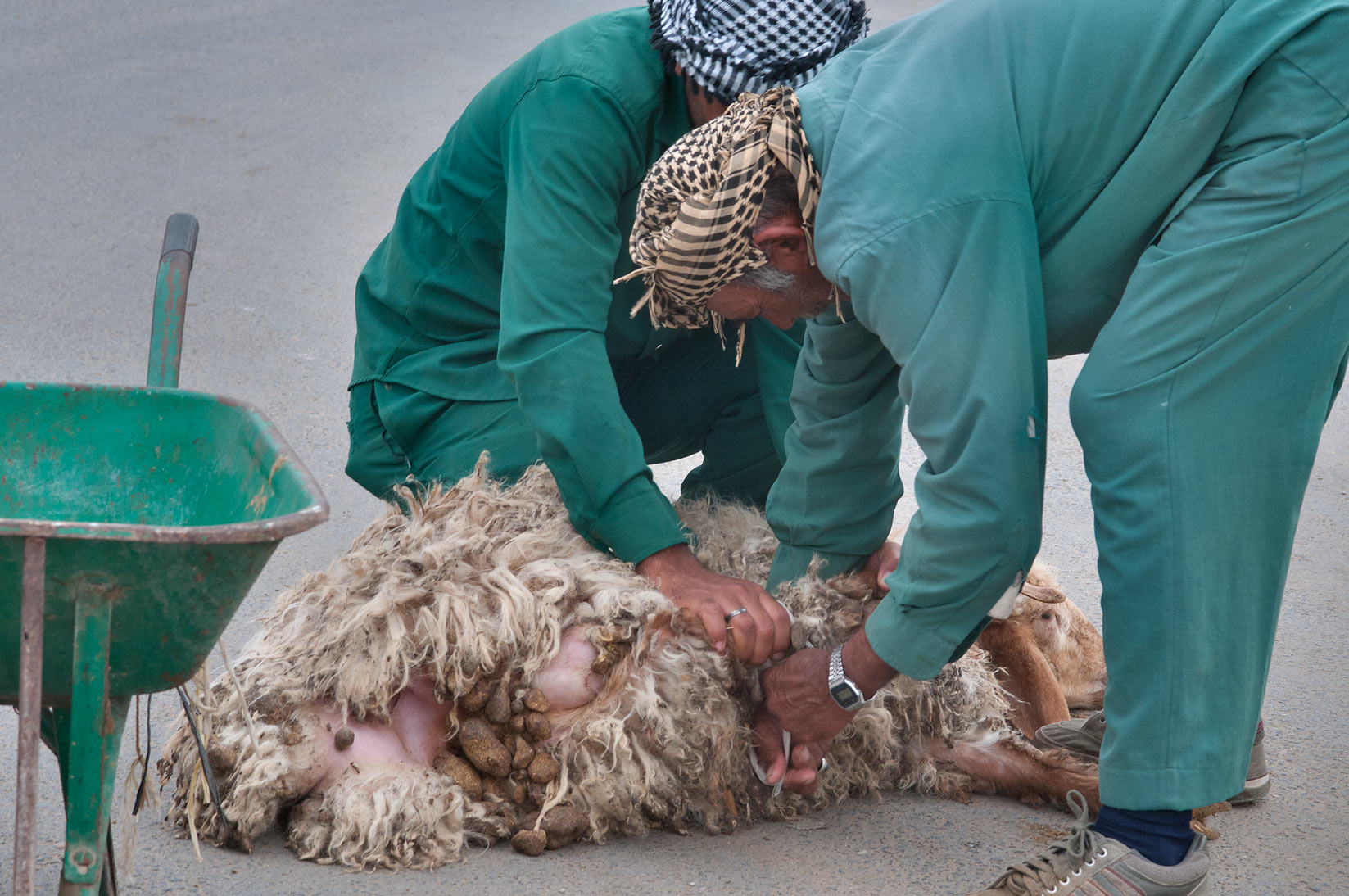 Strapping sold sheep in Sheep Market, Wholesale Markets area. Doha, Qatar