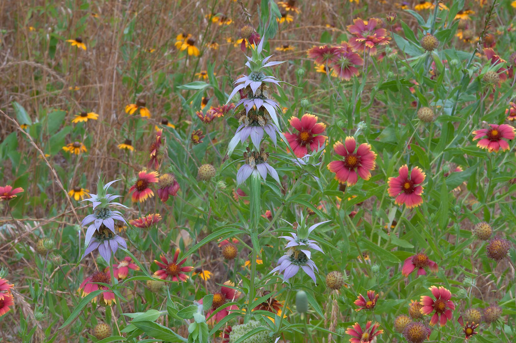 Multicolored flowers in Washington-on-the-Brazos State Historic Site. Washington, Texas