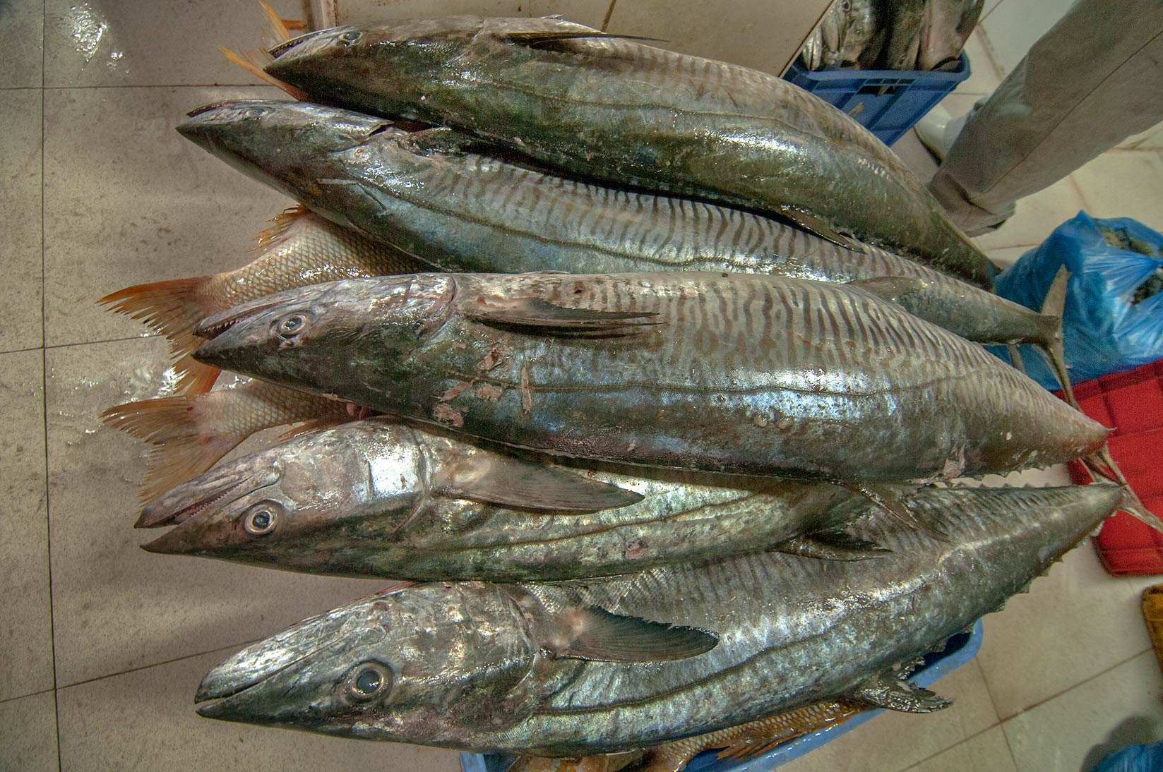 Mackerel in Wholesale Fish Market. Doha, Qatar