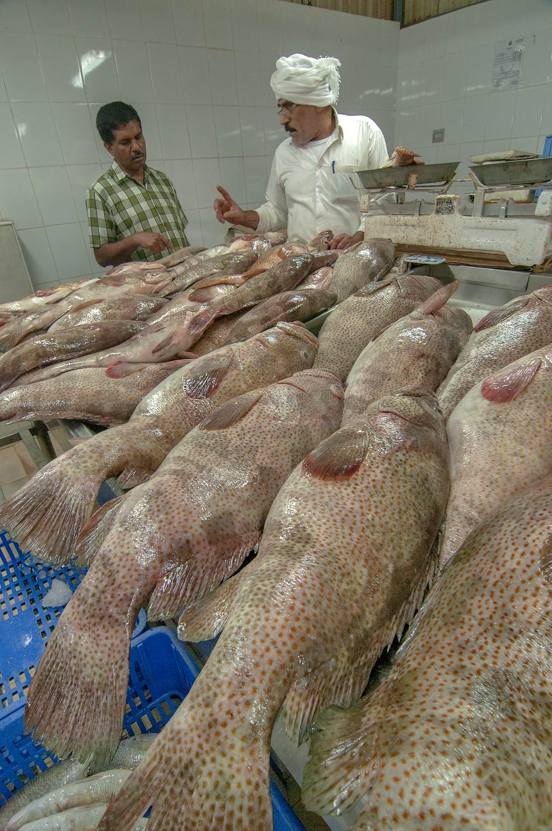 Selling brown spotted grouper (Hamour...Market, Abu Hamour area. Doha, Qatar