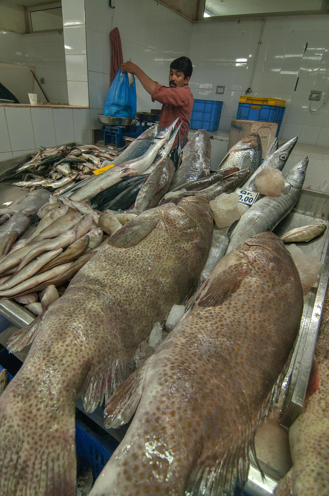 Weighting fish in Fish Market, Wholesale Markets area in Abu Hamour. Doha, Qatar