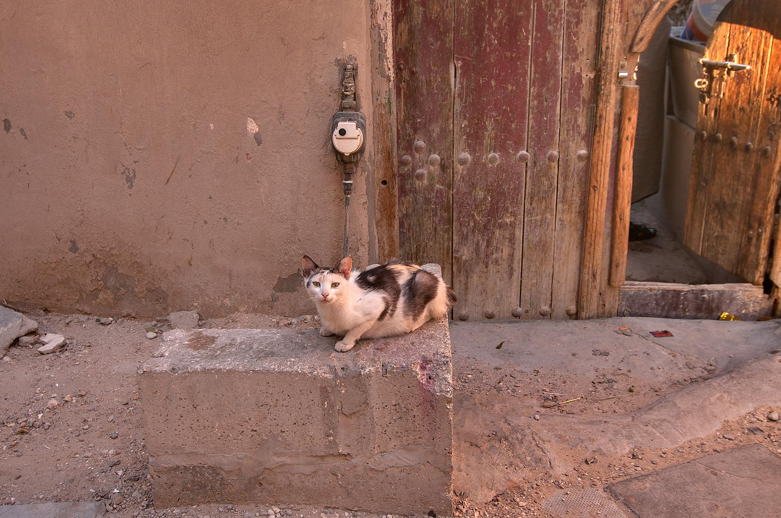 Cat guarding apartment entrance in an alley...Thani St., Musheirib area. Doha, Qatar