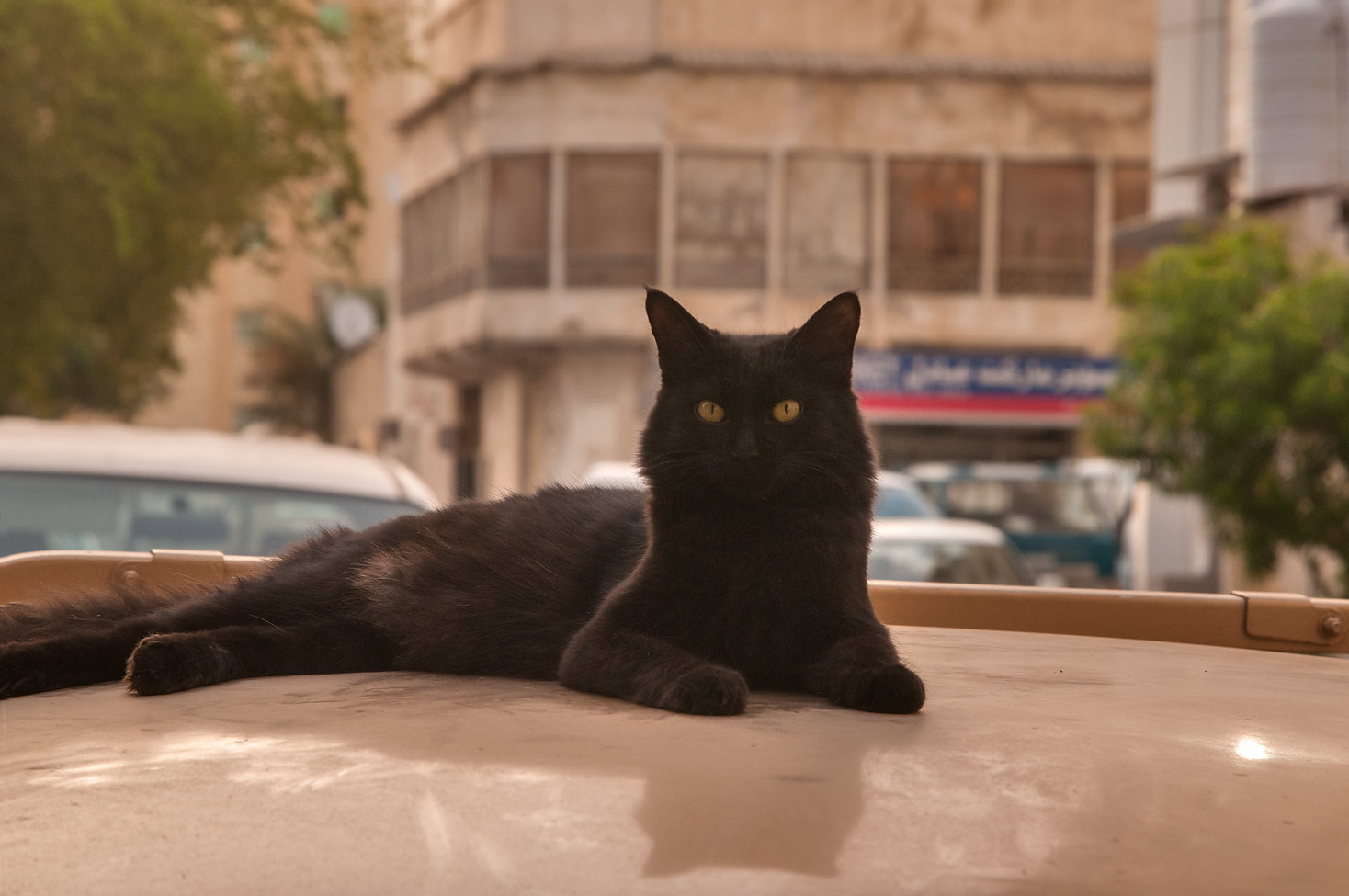Black cat sitting on a car at Muaath Bin Jabal St., Al Doha Al Jadeeda area. Doha, Qatar