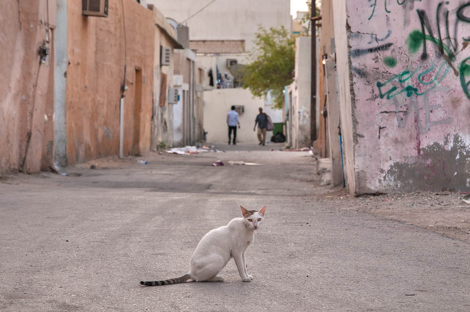 Cat at a corner of Sikkat Numan and Al Taawon in Najma area. Doha, Qatar