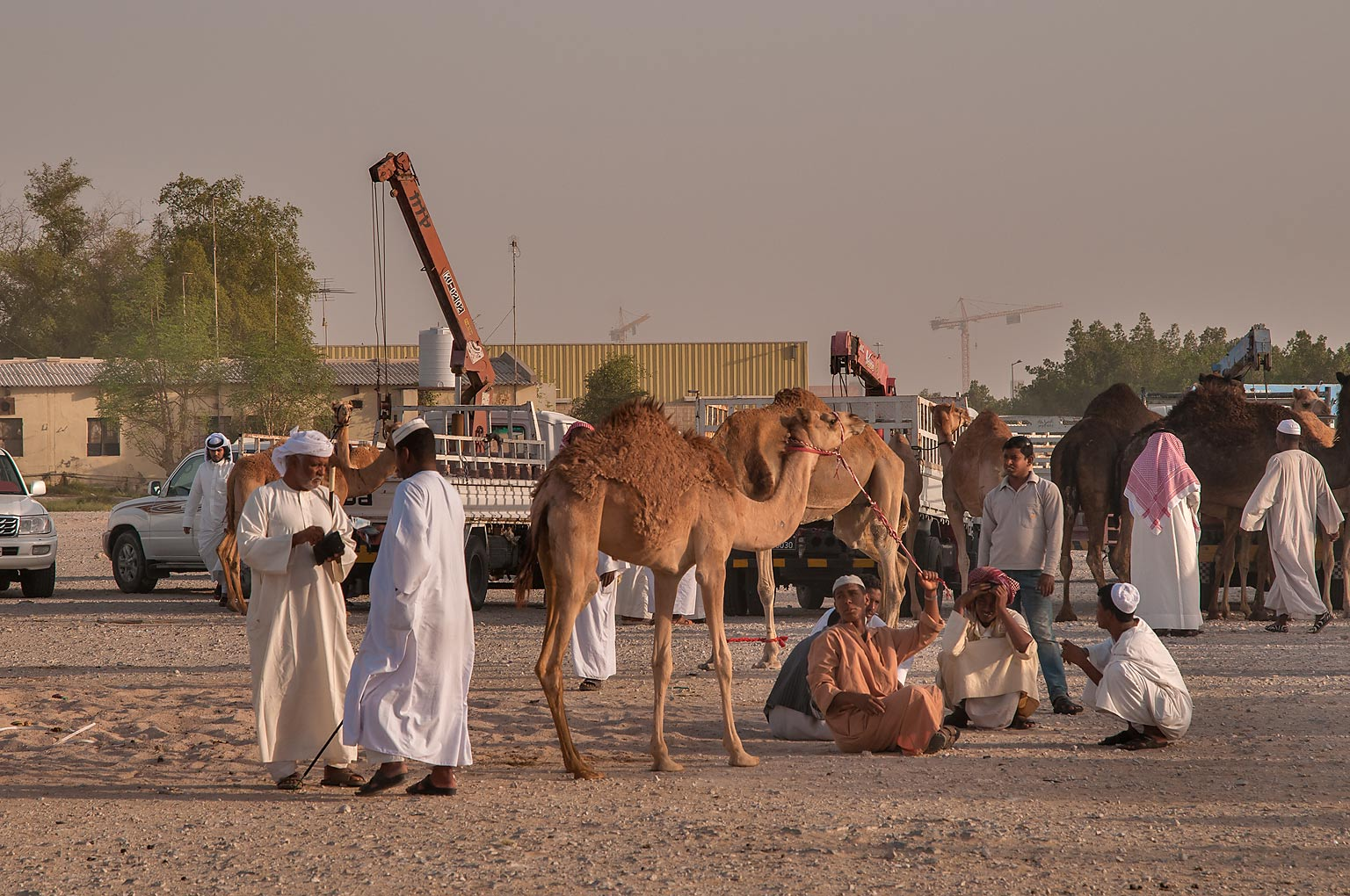 Gathering of people and camels in Livestock Market, Abu Hamour area. Doha, Qatar