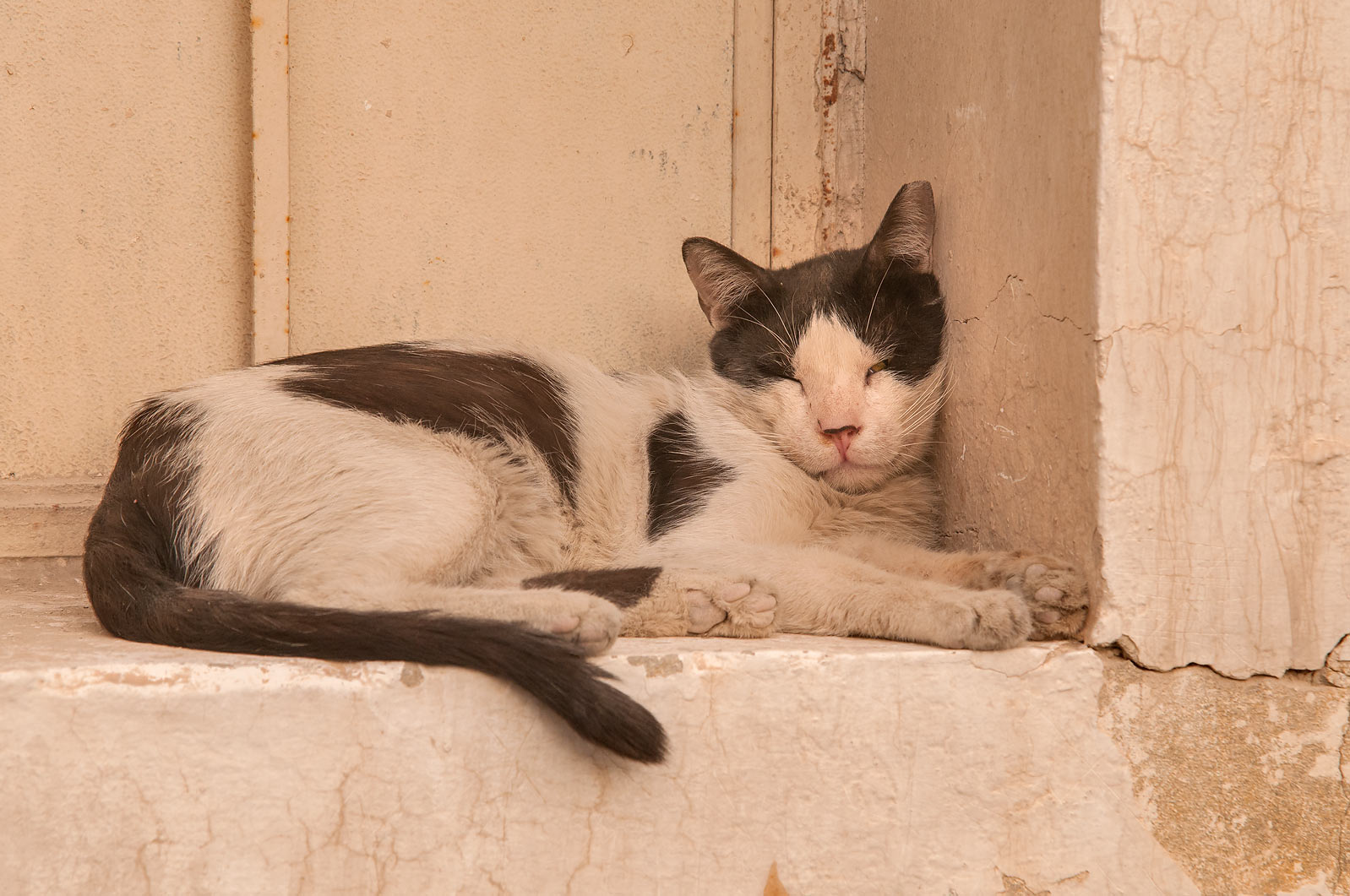 Cat sleeping at Al Jassasiya St., Musheirib area. Doha, Qatar