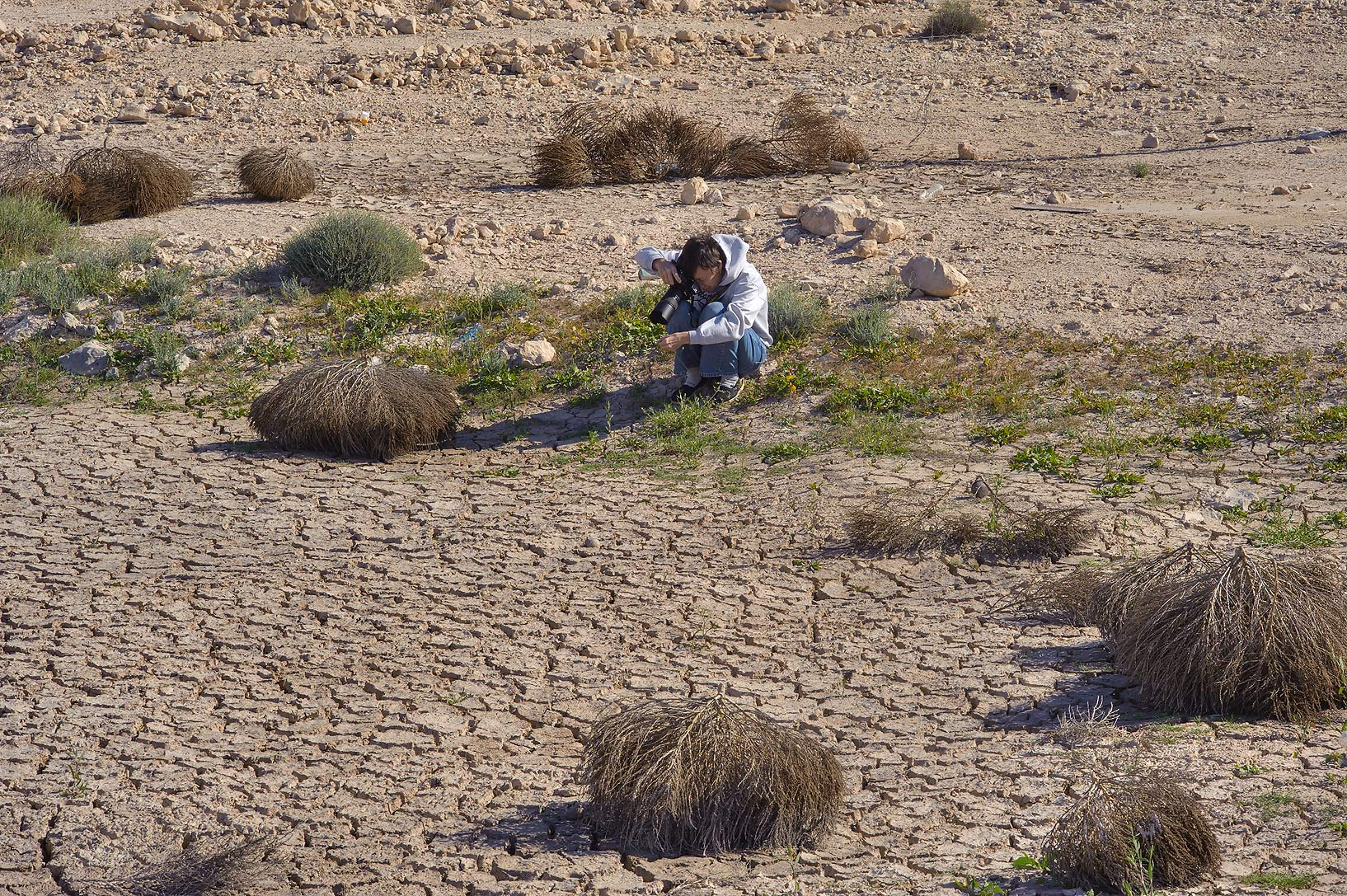 Some dry tumbleweed in a roadside depression of Abu Samra Rd. in southern Qatar