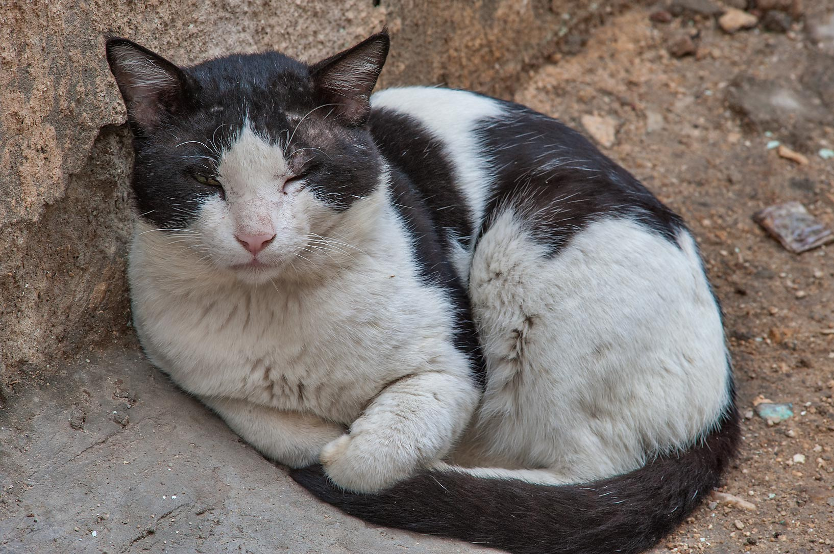 Sleeping black and white cat near Abdullah Bin Thani St. in Musheirib area. Doha, Qatar