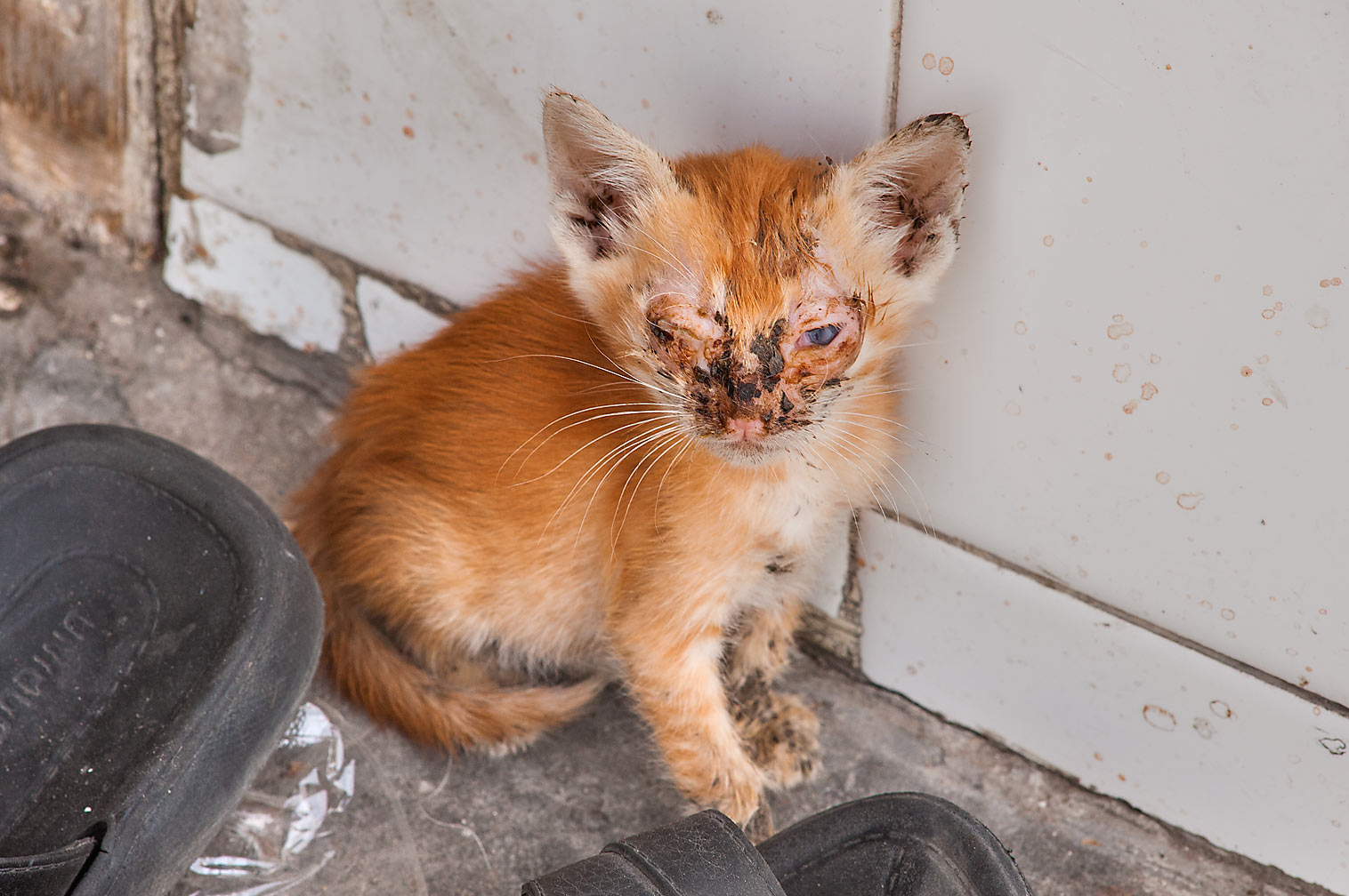 Brown kitten with face infection on Al Najada St. in Musheirib area. Doha, Qatar
