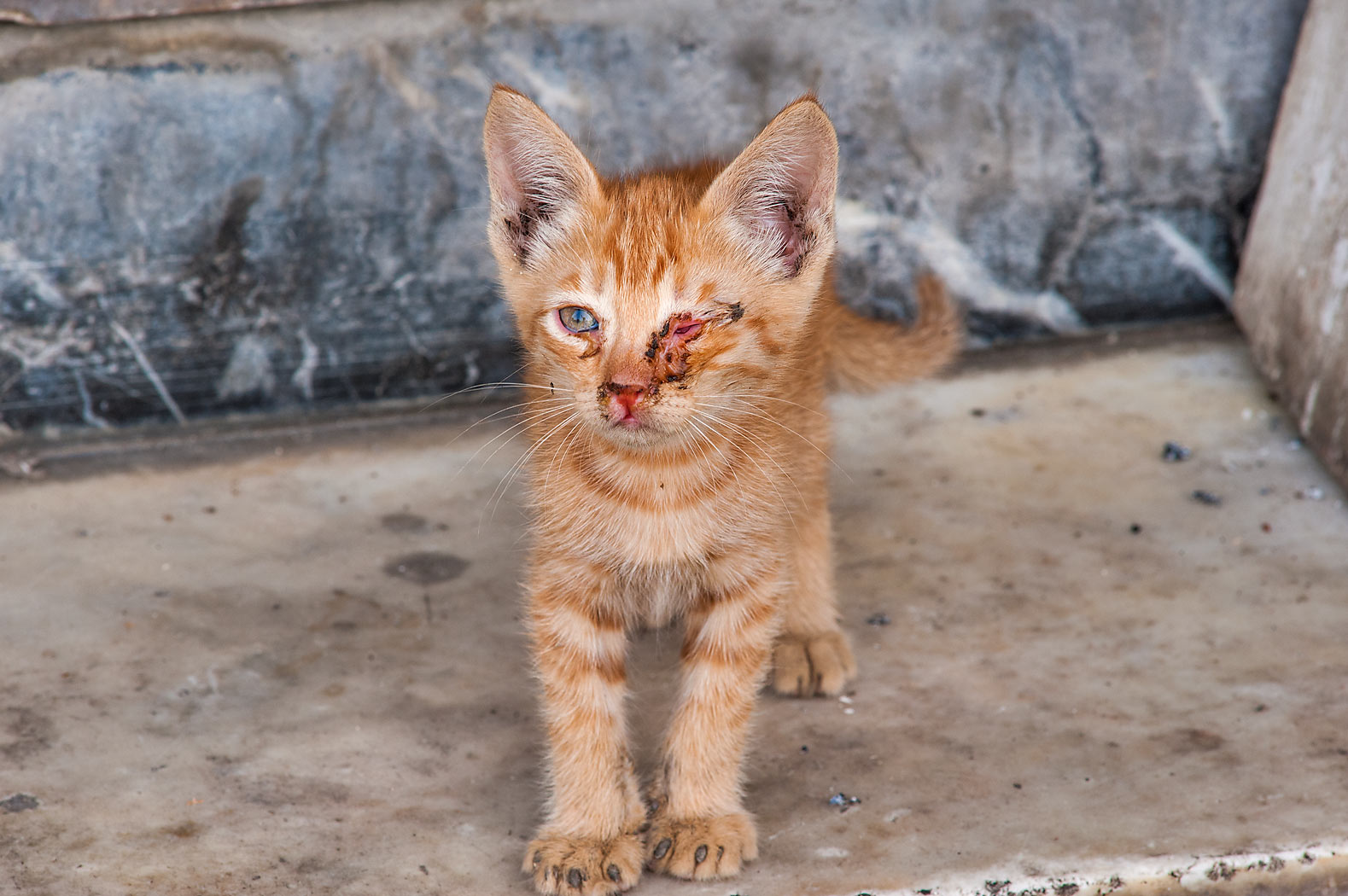 Brown kitten with eye infection on Al Najada St. in Musheirib area. Doha, Qatar
