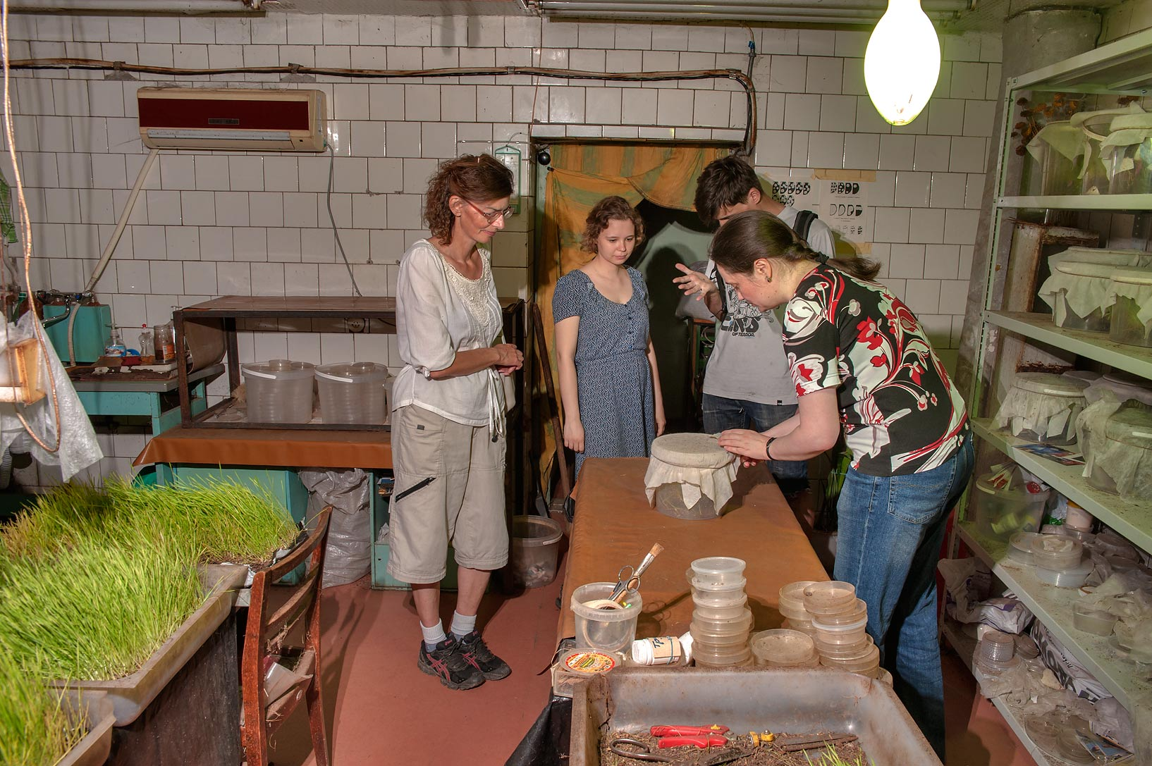 Tour of an insect lab of All-Russian Institute...Selo) near St.Petersburg, Russia