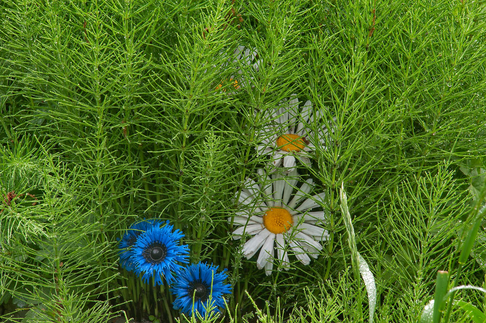 Plastic flowers with horsetail plants (Equisetum...Nevsky Lavra. St.Petersburg, Russia