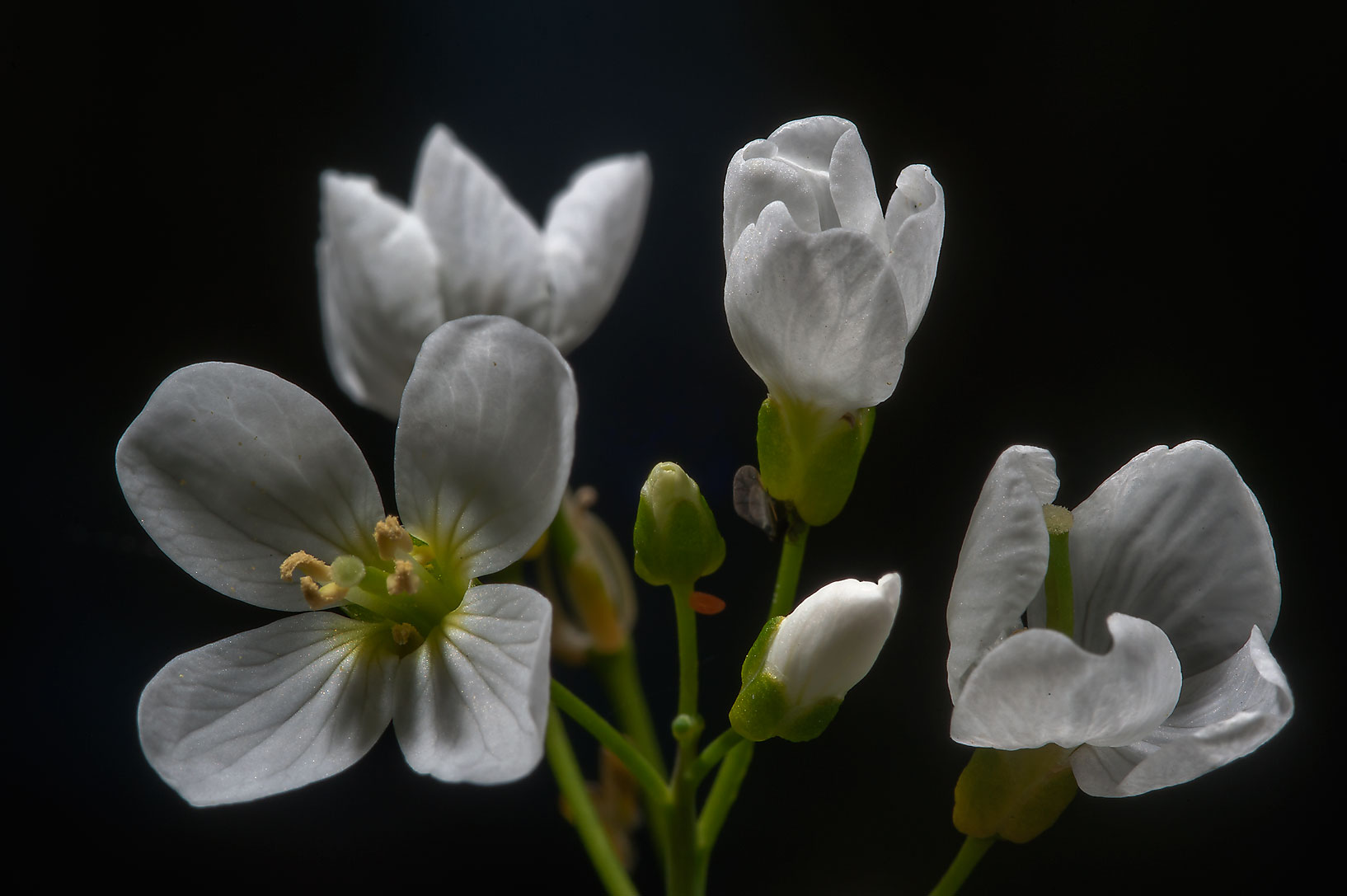 Cardamine flowers near a lake in Orekhovo, north from St.Petersburg. Russia