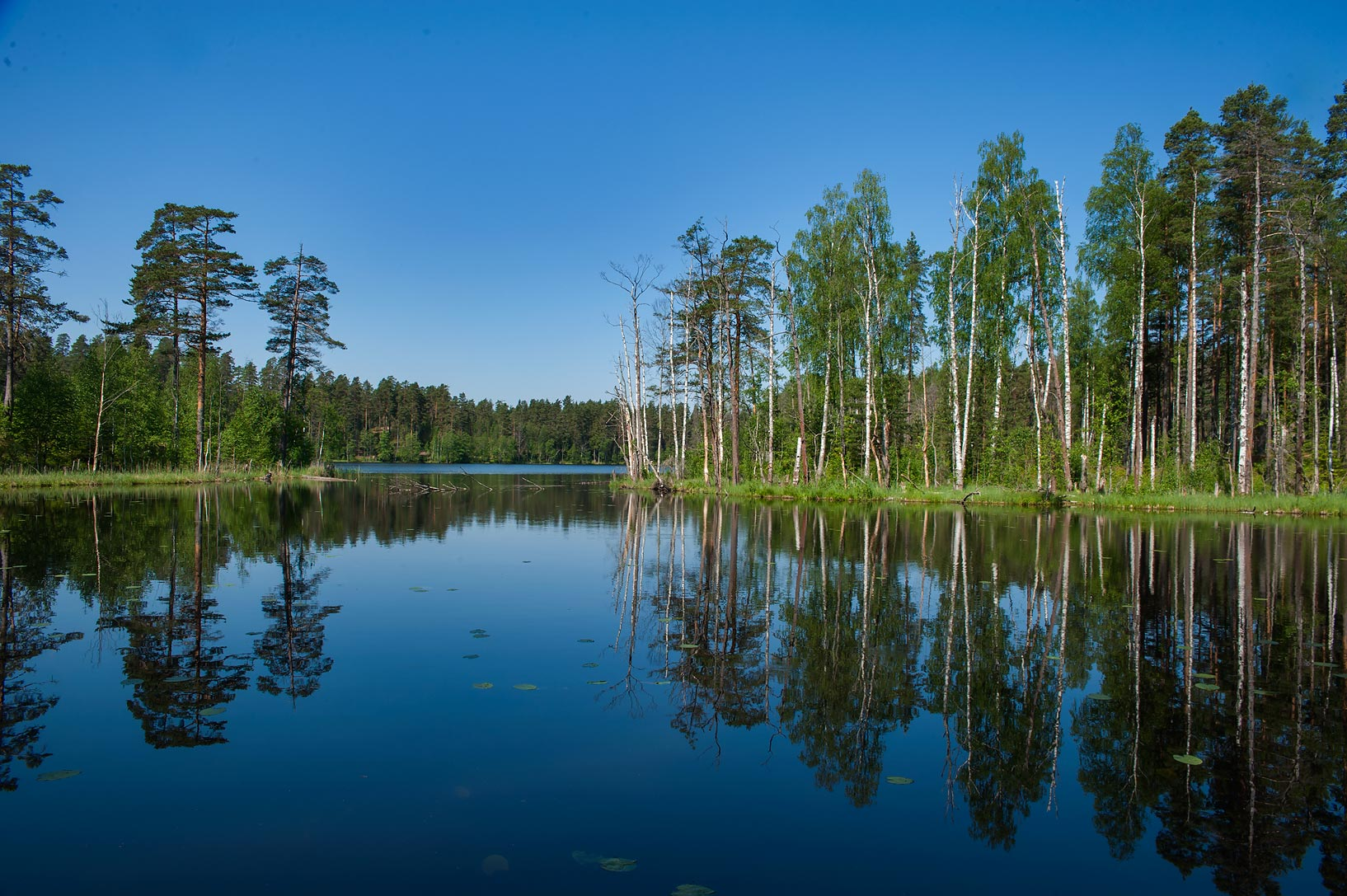 Reflections of trees in Koskijarvi Lake in Orekhovo, north from St.Petersburg. Russia