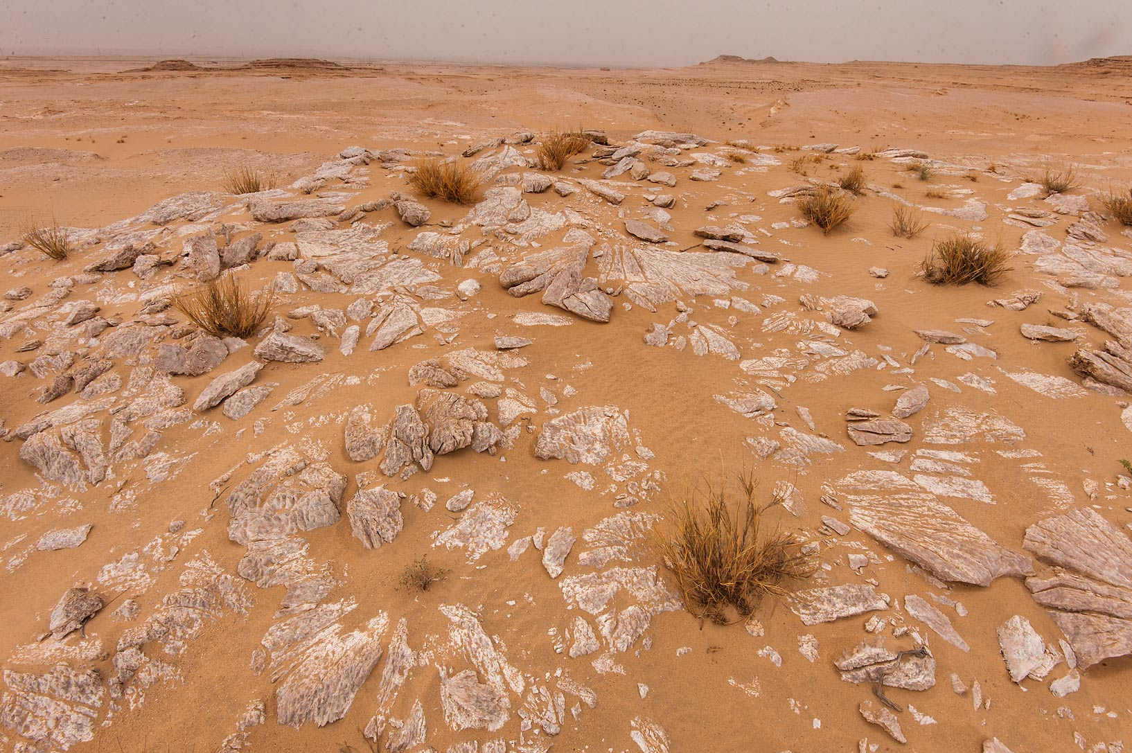 Pavement by gypsum crystals (selenite) in area of...near Salwa Rd. in southern Qatar